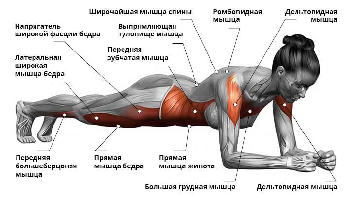 Упражнения для похудения живота и ног в картинках