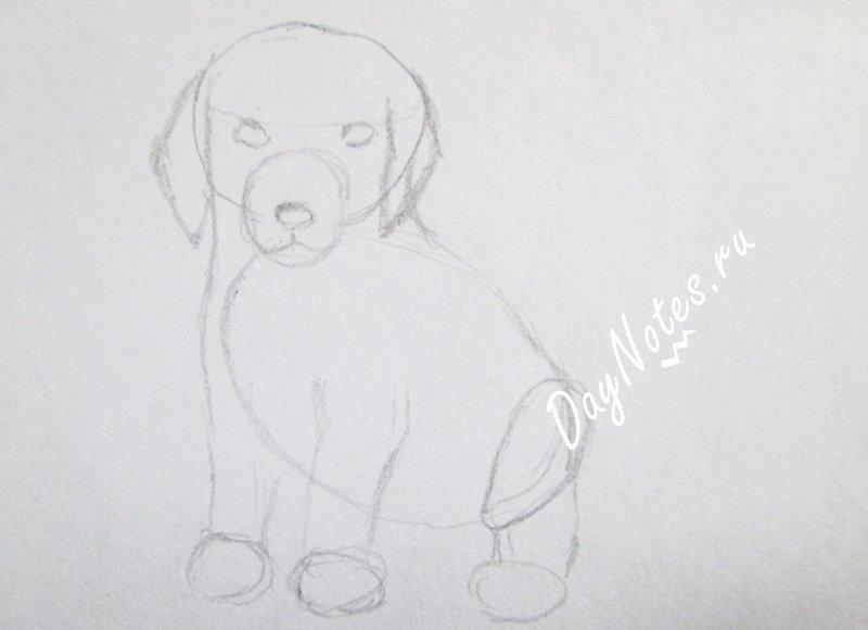 как нарисовать собаку карандашом поэтапно для начинающих детей