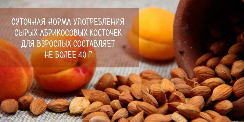 Можно ли есть ядра абрикосовых косточек и сколько — польза и вред